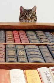 Bookcase Cat  (somehow me thinks this cat is about to pounce on the unsuspecting book browser)
