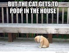 So sad, so cute!