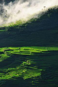 Terrace rice fields Yuanyang, China