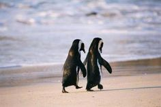 relationship, soul mates, at the beach, penguin, puppi, walk, friend, animal, holding hands