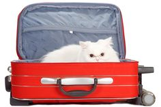 Pet travel policies for top U.S. airlines