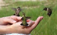 Sierra Vista, Az, the hummingbird capitol of the US !