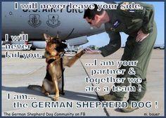 ♥ German shephards so loyal