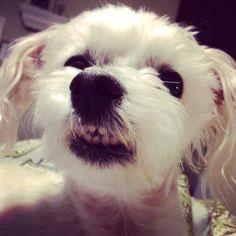Smile Gracie