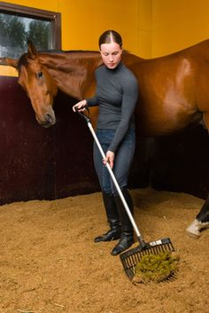 Important information about your horse's health can be detected by noticing his or her  manure - good to know!