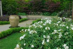 A simple, peaceful sitting area filled with Flower Carpet White roses.