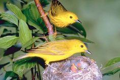 Backyard Birds..tips for identifying and feeding birds in your yard. Even has a birdsong identifier!