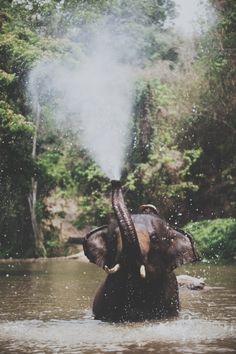 { elephant }