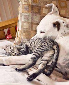#cat #dog