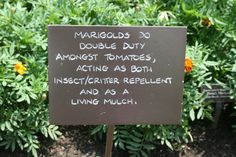organic gardening tips from chicago botanic gardens