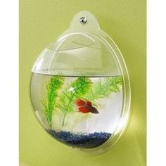 My fish wants one of these!!!