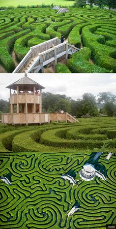The Longleat Maze is the longest hedge maze in the world! Get lost! #labyrinth