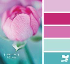 Macro Bloom - VC aqua, baby aqua, raspberry, rose, and pink