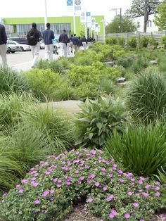 Roy Diblik, co-owner of Northwind Perennial Farm in Burlington, WI installed this contemporary perennial garden outside of the Gary Comer Youth Center in Chicago, IL.