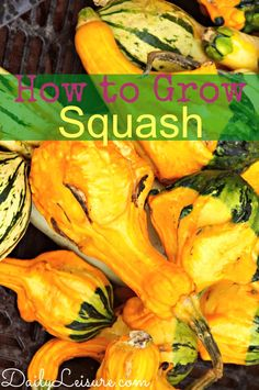 How to Grow Squash #gardeningtips #organic #gardening