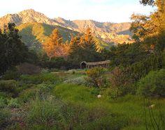 Pico Iyer's Santa Barbara - one of my favorite travel writers reveals what he loves about Santa Barbara barbara botan, botan garden, santa barbara, california, gardens
