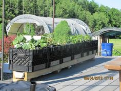 Milk crate planters on rain gutter irrigation system.