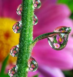 flowers reflected in rain drops ! water reflections, water drops, waterdrop, macro photography, dew drop, beauti raindrop, dewdrop, bubbl, rain drop
