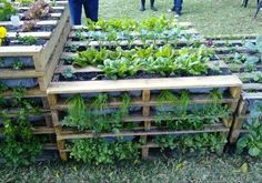 A vertical AND horizontal pallet garden...I might have to file this under Garden 2013.