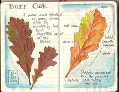 autumn leaves, nature journal