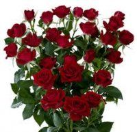 Bulk Spray Roses - RED.  Starting at $187.95  It is best  to refer to spray roses in bloom counts.  There are usually 4-7 flowers per stem, and clusters of blooms 2 to 3 inches in diameter.     Bulk red spray roses are stunning addition to  any arrangment or bouquet.  Click here to see our bulk spray roses in other colors.    Description: The spray rose consists of several small dainty roses per one branched stem.