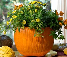 Fall decorating idea: Turn a pumpkin into a beautiful centerpiece for your table. Our friends at Miracle Gro will show you how when you click through.
