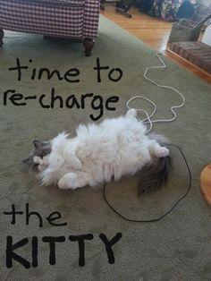 re-charge that Ragdoll!