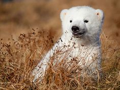 World's cutest polar bear!