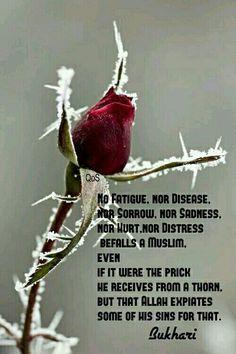 Hadith ( saying ) of