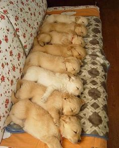 This is just too cute. Wonder how the pups were all line up for this to be taken?