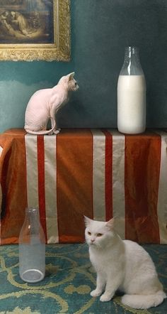 """""""Cat Dreams"""" (2009) by Bodgan (Bono) Zwir"""