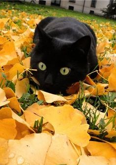 Autumn and black cats