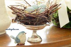 Nest, egg and bird
