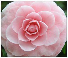 Glamelia Wedding Bouquet