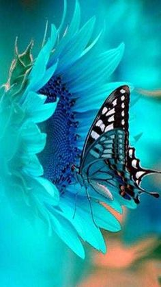 turquoise blue, blue flowers, nature, butterflies, sunflowers