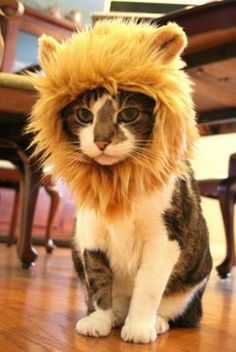 CatLion: Is It a New Specie? - Orble