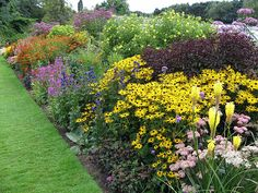Border Garden (how can so many plants be in bloom at once?!)