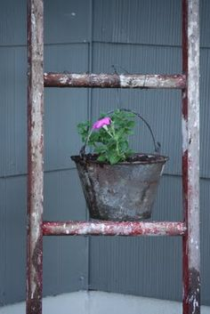 Using an old rung ladder to hang rusty pails of flowers! Cute!
