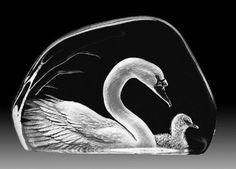 "Mats Jonasson, Maleras Sweden Lead Crystal Swan & Cygnet Sculpture.  etched/carved/sand blasted from the reverse.  It measures  6"" long, 3/4"" wide by 4"" tall. 	This is from the   Wildlife Collection..."