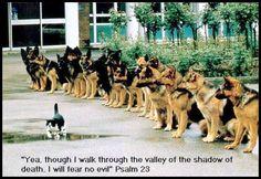 Police dog training?