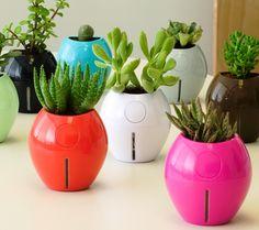 Self-Watering Grobal Pot - no more killing plants!