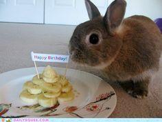 Bunny Birthday!