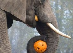 PetsLady's Pick: Cute Elephant Snack Of The Day  ... see more at PetsLady.com ... The FUN site for Animal Lovers