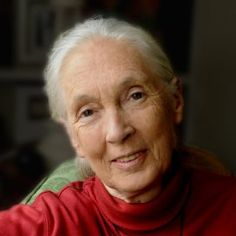 Dr. Jane Goodall, DBE - the world's foremost expert on chimpanzees
