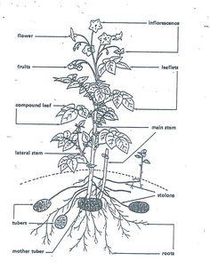 for the garden    on pinterest