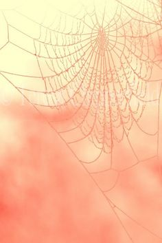 pink spiderweb