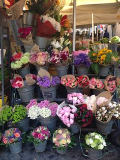 Flowers in Rome, Italy