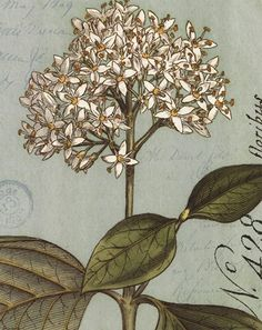 Botanique Bleu IV / Wild Apple Studio