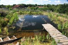 A DIY natural swimming pool. The pool is set up so nature/plants provide clean water for swimming. Not only is there NO chemicals involved it also is a healthy place for wildlife to grow and something of beauty for your backyard.
