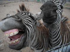 Sierra Safari Zoo, Reno
